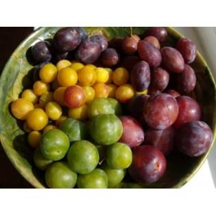 Variété de prune du moment 500g